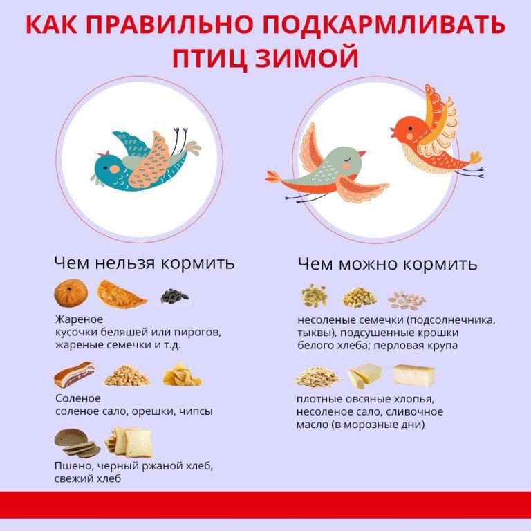 Акция «Покормите птиц зимой» курган афиша расписание