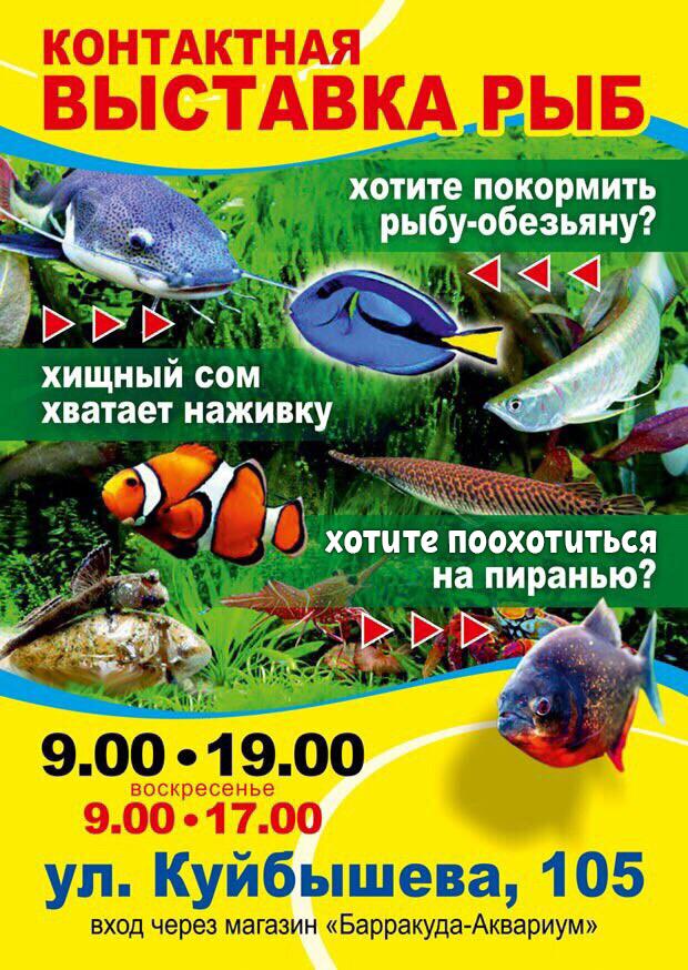 Контактная выставка рыб курган афиша расписание