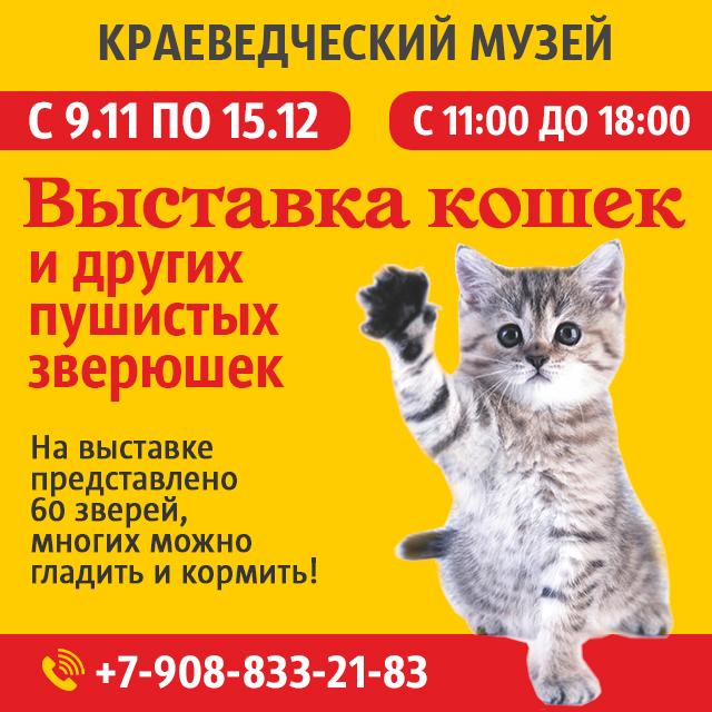 мероприятие Выставка кошек и других зверюшек курган афиша расписание