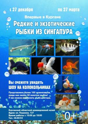 мероприятие Выставка редких и экзотических рыбок из Сингапура курган афиша расписание