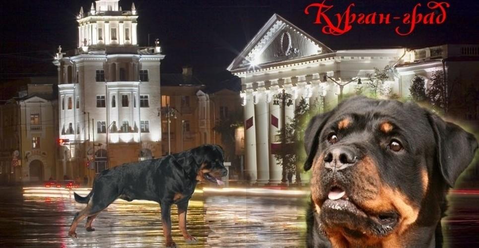 Курган-Град, клуб любителей собаководства  в Кургане афиша курган