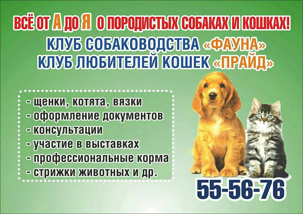 Прайд, Фауна - клуб собаководства, клуб любителей кошек в Кургане афиша курган